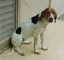 Lexington Rockbridge SPCA Dogs